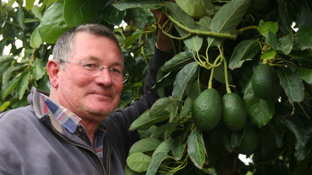 Barry Avery – avocado grower